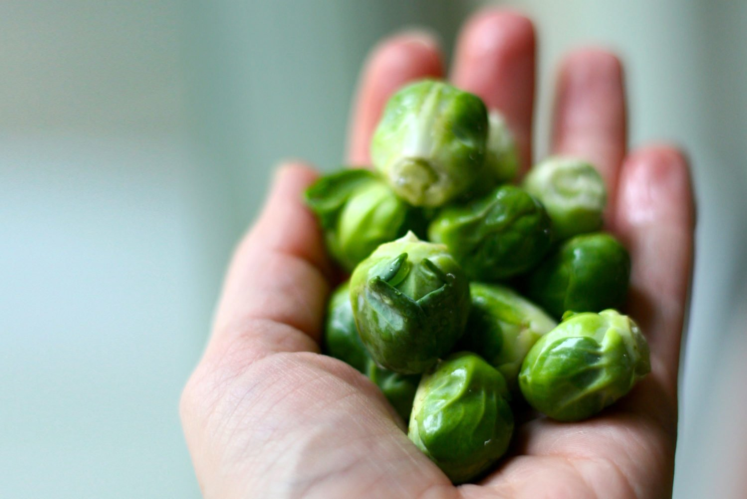 Oregano Brussels Sprouts | HoneyColony