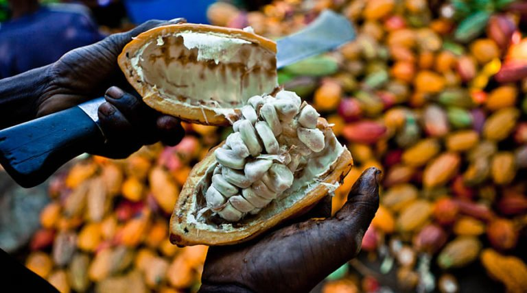 Is The Chocolate Supply Under Threat? The Future of Cacao
