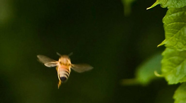 Bee-Harming Pesticides Banned In Europe
