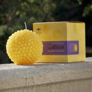 Allium candle (2)