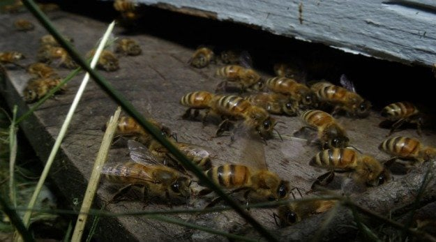honeycolonybees