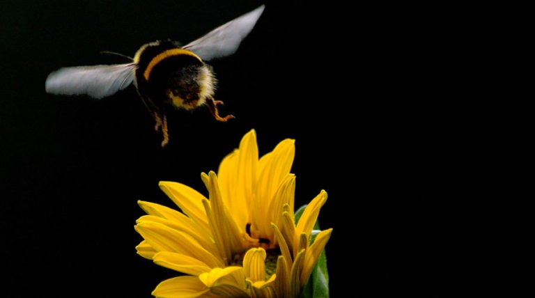 Scientists Call For Cosmetic Insecticide Ban After Record Bumblebee Deaths