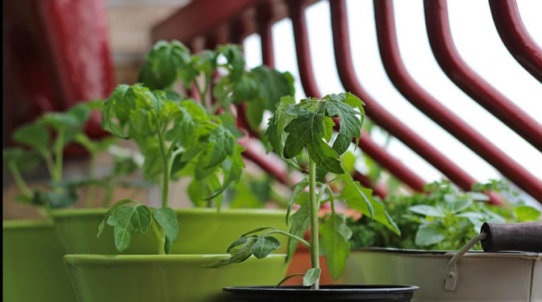 How To Grow Your Own Organic Food In Small Spaces