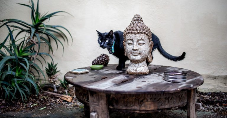 Cannabis For Cats: How Far Would You Go For Your Pet?