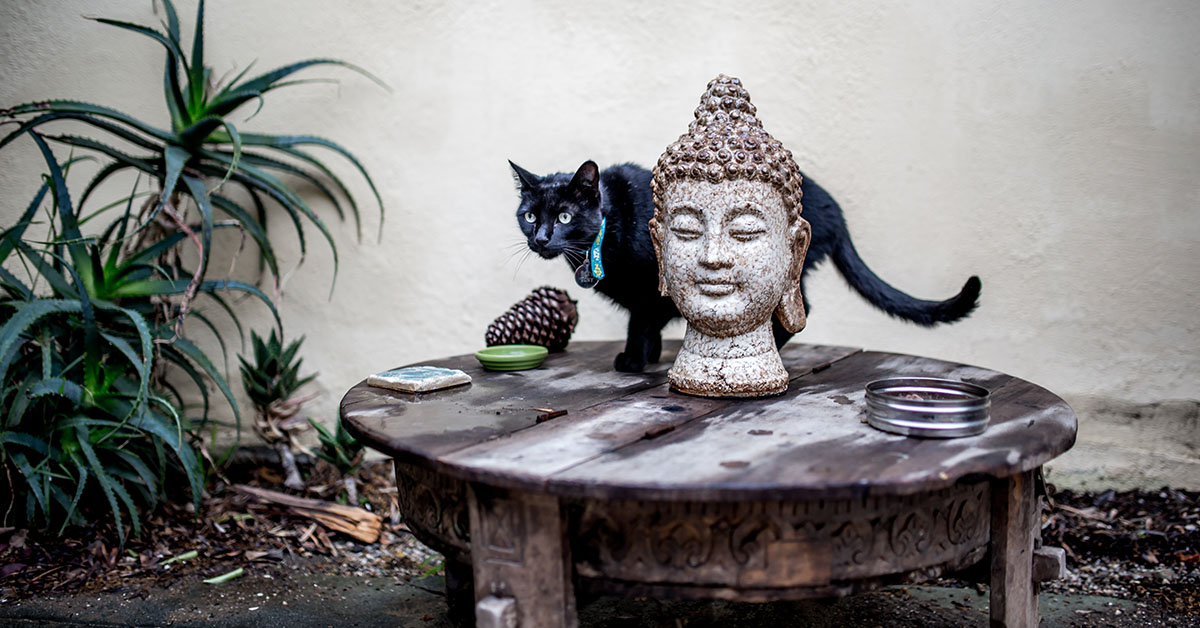 Wondering about cannabis for cats and how it could help with first aid? Hear a story about how cannabis helped one writers feline friend.