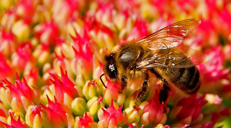 Bee-n to Ban Systemic Pesticides, Plans to Sue EPA