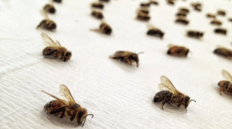 Giving Bees New Life In Art: One Artist And Beekeeper's Story