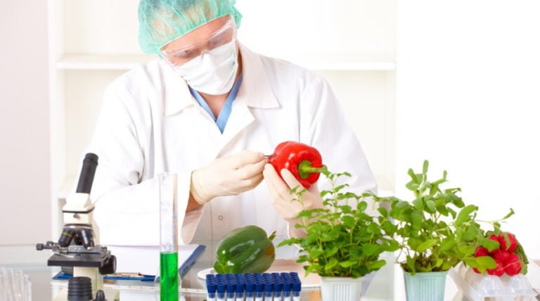 The 'Scientific American' Articles on GMOs