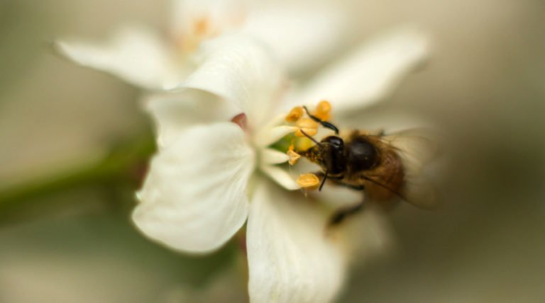 Systemic Pesticides Kill Bees And Harm The Environment