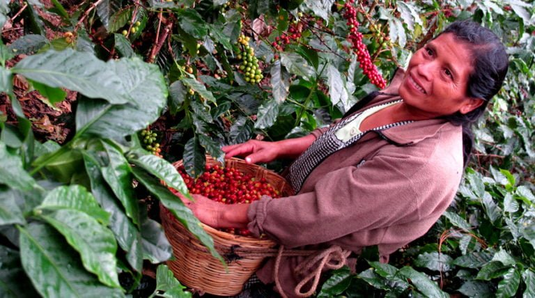 """Go """"From Seed To Shelf"""" With Operation Groundswell In Guatemala This Fall (Food Justice)"""
