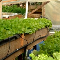 Aquaponics: The Future Of Sustainable Agriculture