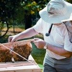 Pesticides and bees.. Systemic Pesticides were pedaled as a safe alternative to older type poisons, but it turns out they are way more deadly to our bees.