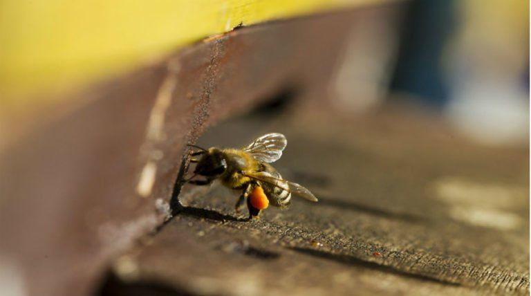 3 Big Lies About Neonicotinoids And Bees