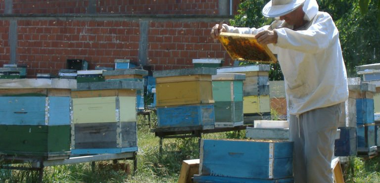 New Perspectives On The Cultivation Of Our Honeybees