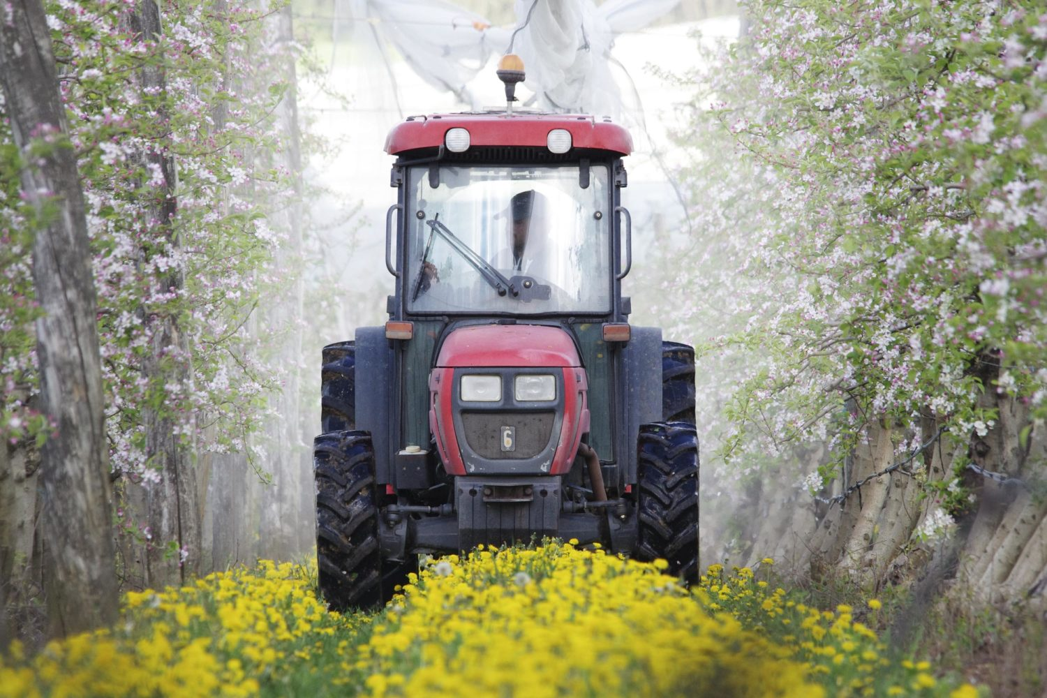 Tractor spraying pesticides on apple plantation in France. Greenpeace conducted a documentation at multiple apple plantation locations in France, in the orchards and in some pesticides rooms where farmers store the products. Greenpeace aims to show the intense use of chemical pesticides in apple production despite its negative impacts on both the human health and the environment.