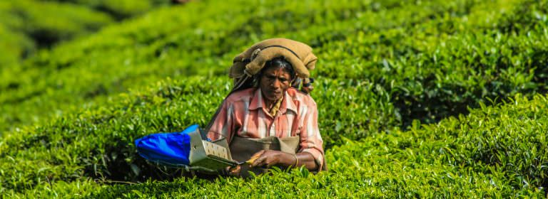 Transforming The Tea Industry: From Plantations To A Small FarmerModel