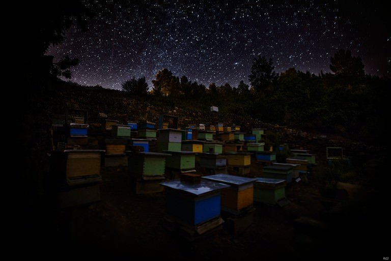 A Contemporary Look at 9 Famous Modern Beekeepers