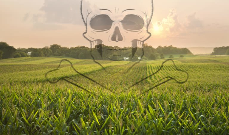 Monsanto's Roundup Ready: 42 Years Old And Everywhere It Shouldn't Be