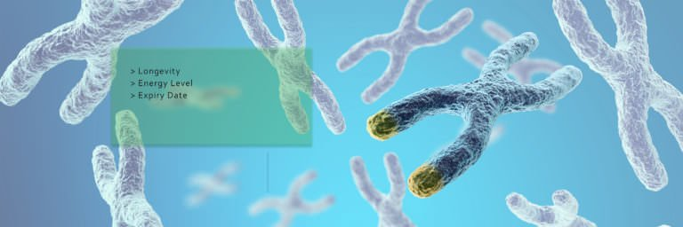 Telomeres: Immortality Hidden In Your DNA