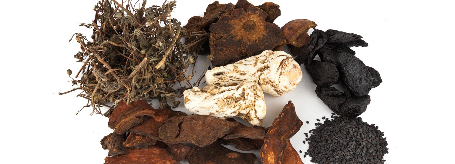The Chinese herb He Shou Wu is is cloaked in myth and mystery. Here are 6 amazing health benefits of this herb, all backed by science!