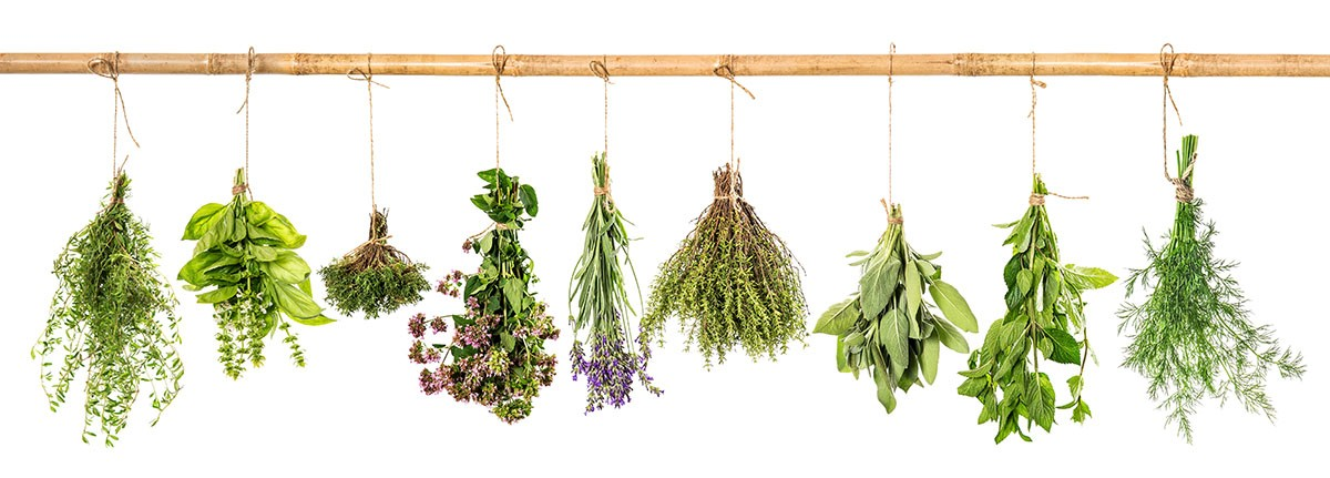 Collection of fresh herbs for migraine relief. Basil, sage, dill, thyme, mint, laven