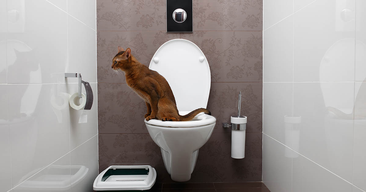 how can i teach my cat to use the toilet