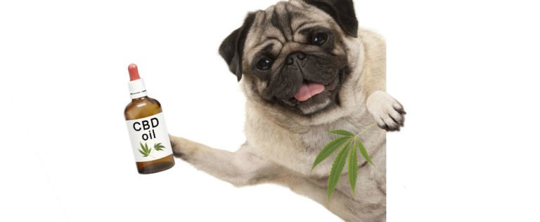 CBD Oil Benefits For Dogs: Amazing Benefits And Unwanted Risks